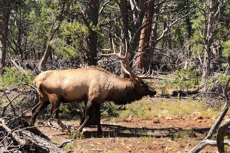 животные в национальном парке Гранд каньон США